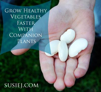 Companion-Planting-susiej