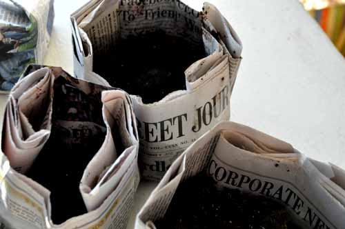 newspaper seedlingpots1
