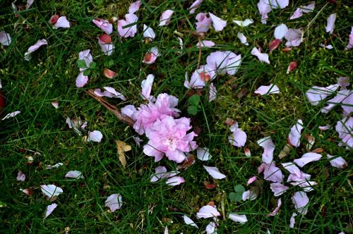 petals12