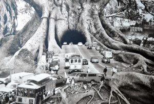 redwood forest008