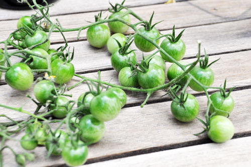 green tomato chutney002