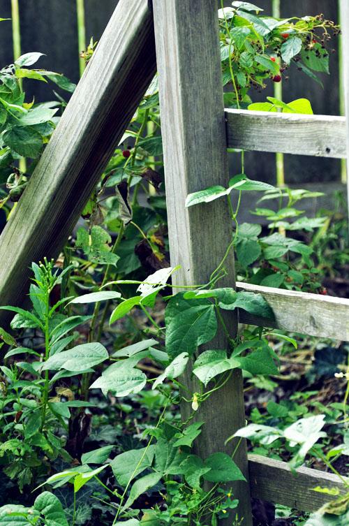 gardendsc_0021