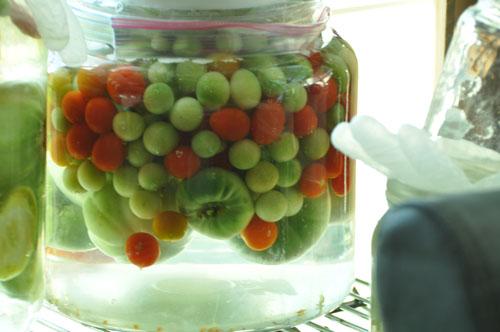 fermented tomatoesdsc_0001