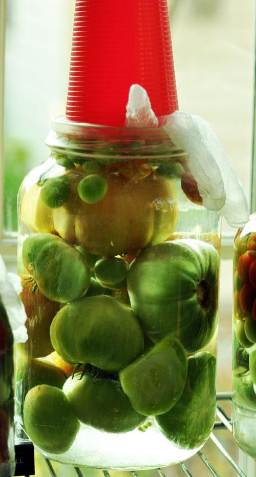 fermented tomatoesdsc_0332