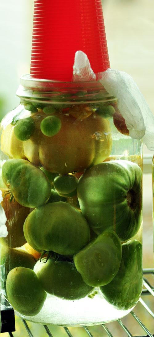 fermented tomatoesdsc_0333