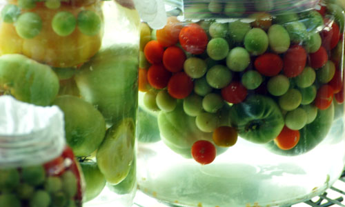 fermented tomatoesdsc_0350