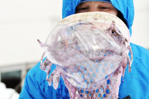 frozen bubbles009