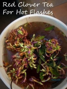 red-clover-tea-for-hot-flas
