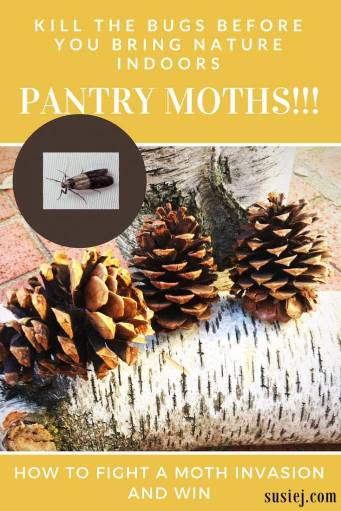 how to get rid of moths in food pantry